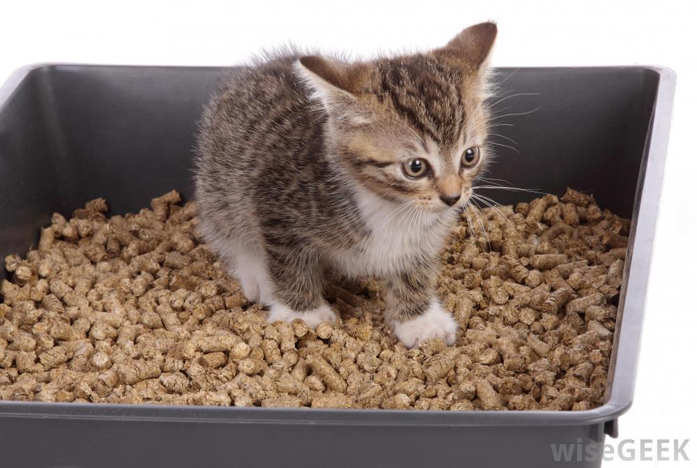 House Cat Not Using Litter Box