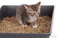kitten-in-a-litter-box (1)